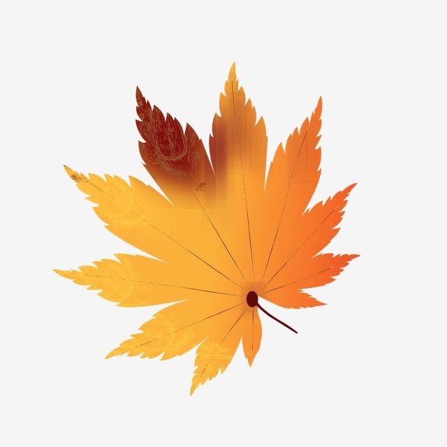 Autumn Leaves Design Element Decorative Pattern Ai Hand Drawn Maple Leaf Maple Leaf Clipart Autumn Leaves Design Element Png And Vector With Transparent Back Maple Leaf Clipart Leaf Clipart Leaf Design