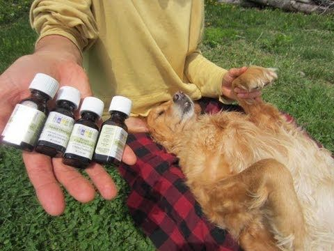 Natural Flea & Tick Repellent for Dogs & Cats # 2 - YouTube  Use cedarwood, lemongrass, citronella, or orange essential oils  (Disclaimer: the guy in the video is...different...but I'm still definitely going to try this because I HATE frontline!)