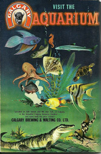An illustrated vintage ad for the Calgary Aquarium.