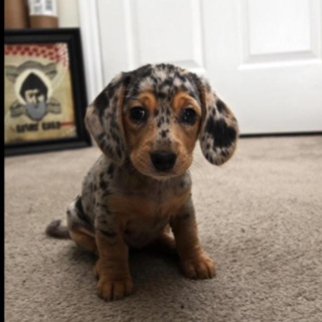 I want him!<3