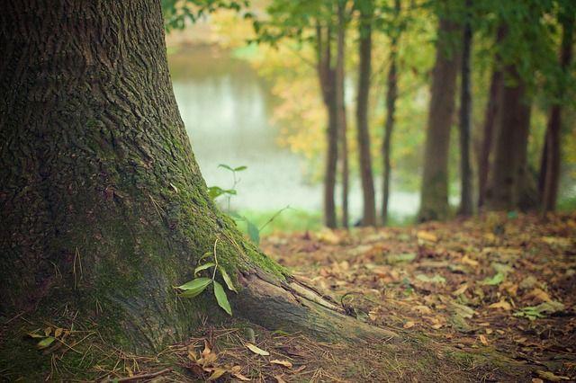Woont u in een bosrijk of landelijk gebied? Dan heeft u meer kans op ongedierte. Wees overlast en schade aan uw spullen voor door ongedierte te weren.