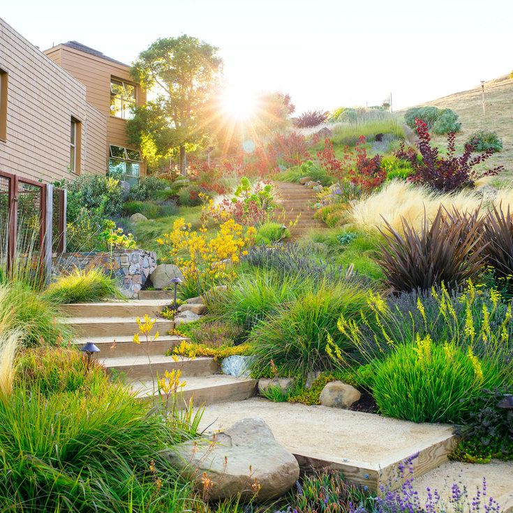 Big Backyard Landscaping Ideas: 1000+ Ideas About Low Water Landscaping On Pinterest