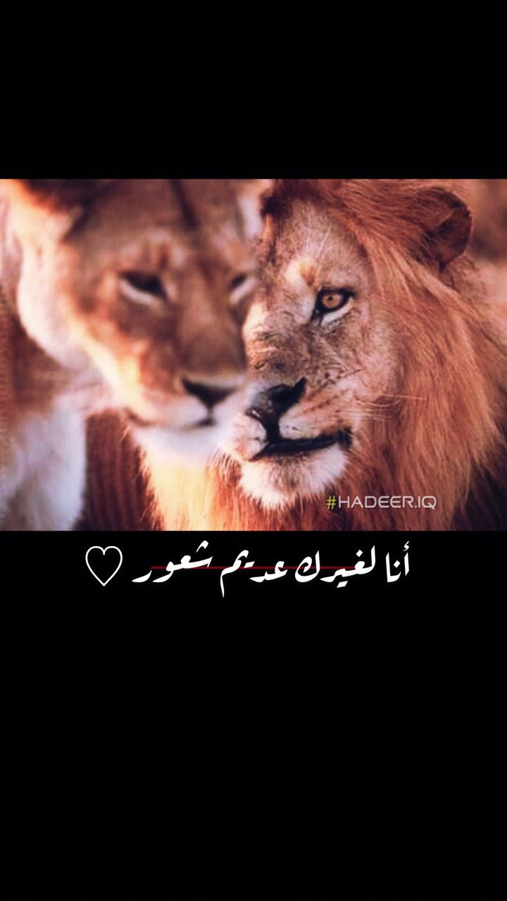 اسد لبوه حب Lion Lion Couple The Magicians Syfy Lion Art