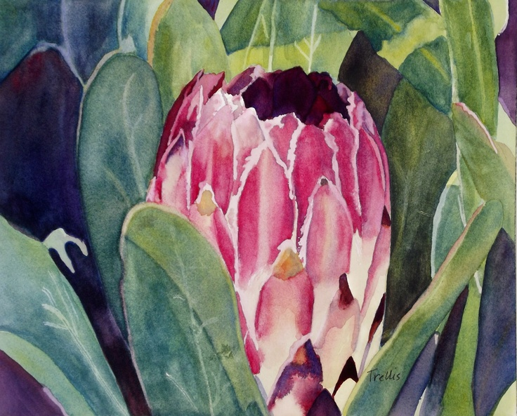 """""""Protea""""  One of my watercolors"""