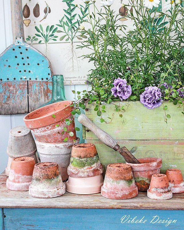 Elsker gamle terrakotta potter med patina...og denne fangsten fant jeg på @brynsblomster ❤ Flotte til dekorasjon og planting❤ #orangeri #gardeninspiration #gardening #hage #uterom #hagelivoguterom #vibekedesign#vakrehjemoginteriør #interiomagasinet #levlandlig #lantliv