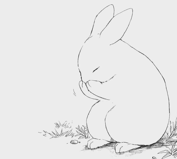 Line Drawing Bunny : Best images about drawing rabbits on pinterest