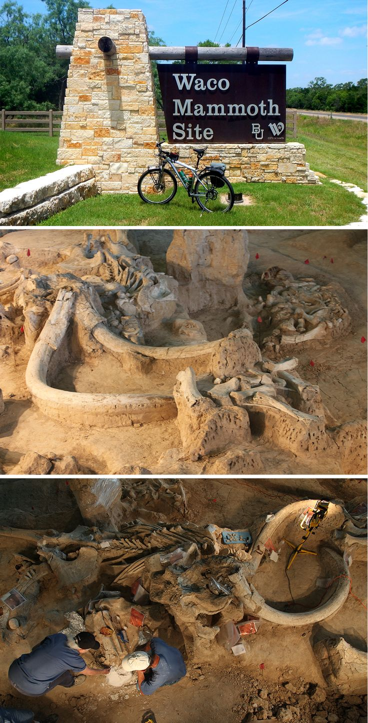 Waco mammoth site coupons