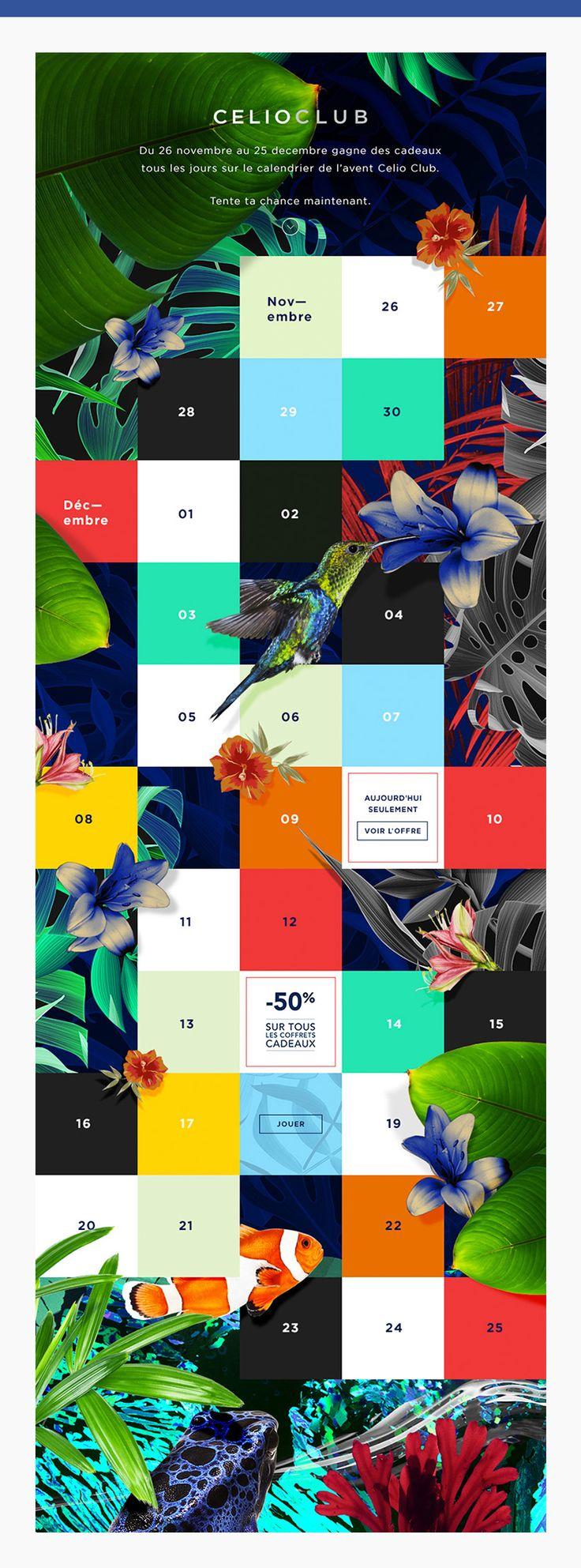 celioclub facebook tropical perroquet website graphisme
