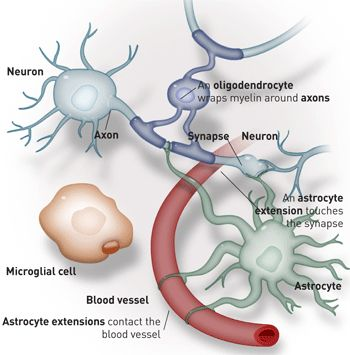 281 best images about Neurology & Neuroscience on ...