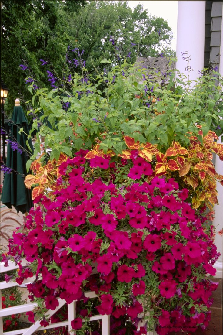Potted Garden Flowers 3106 best container gardening images on pinterest | gardening