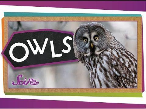 All About Owls for Kids: Backyard Bird Series - FreeSchool - YouTube