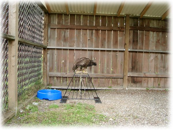 Mews and Weathering designs   Apprentice Falconry Forums ...