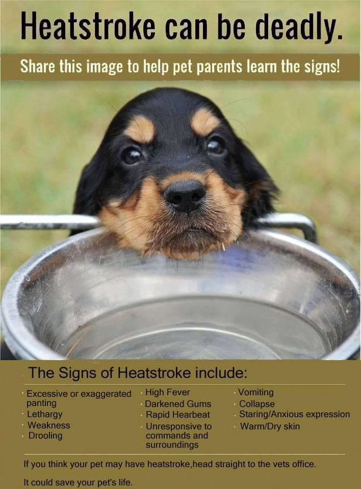 KNOW THE SIGNS OF HEATSTROKE IN YOUE PET