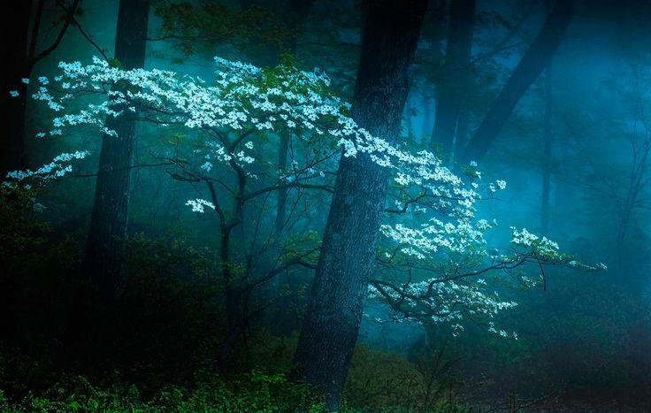 Туманный лес (II) Дейвом B на 500px