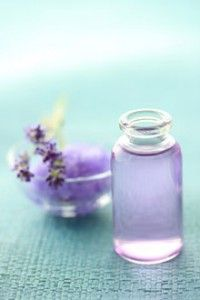 Spotlight on Lavender