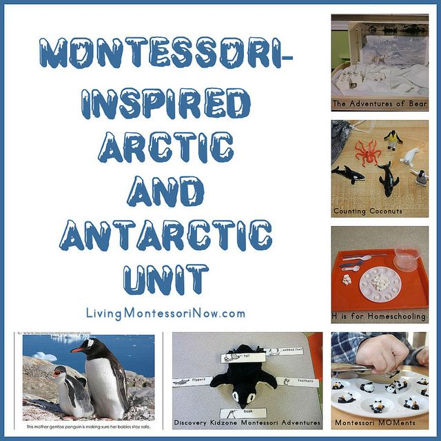 Lots of resources and activities for a Montessori-inspired Arctic and Antarctic unit
