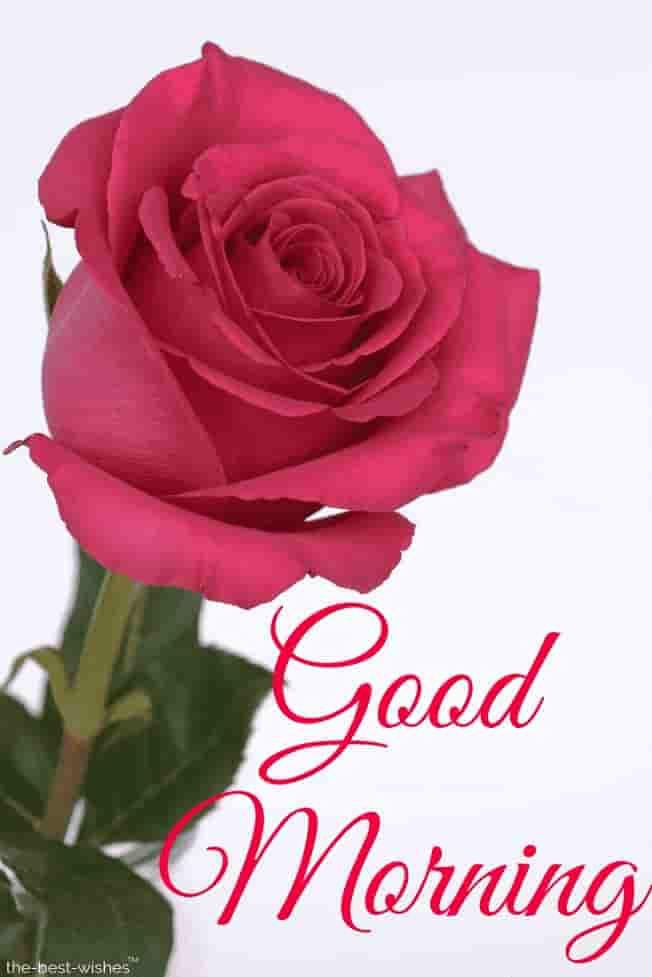 Top 134 Good Morning Wishes With Rose Best Hd Images