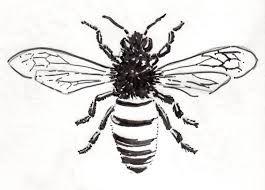vintage honey bee illustration - Google Search