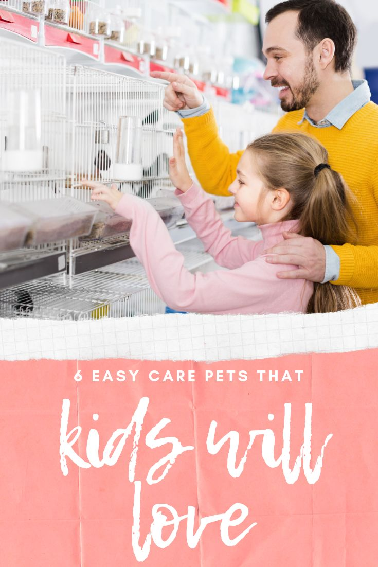 6 Low Maintenance Pets That Both Kids and Moms Will Love