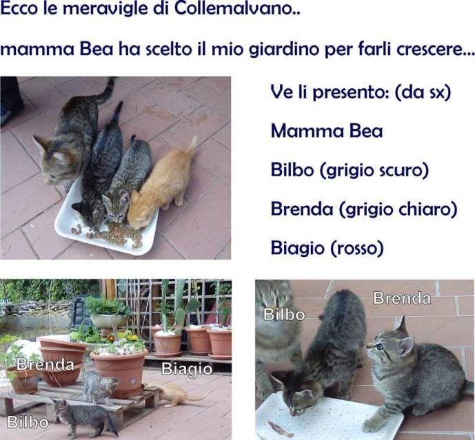 Cuccioli di gatto splendidi si regalano