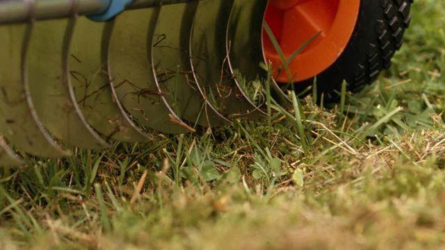 Moos im Rasen lässt sich dauerhaft bekämpfen. (Quelle: imago/Redeleit)