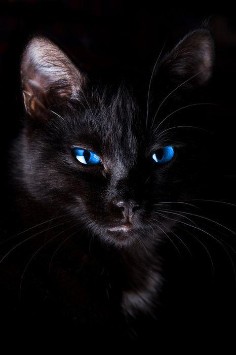 black cat....with deep blue eyes...