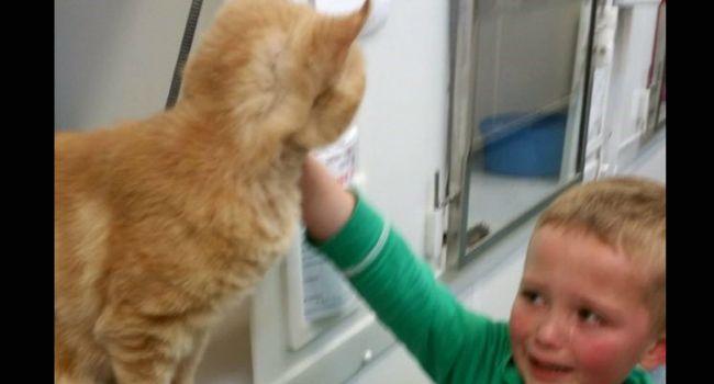 Menino Visita Abrigo Para Adotar Gato e Encontra o Seu Antigo Gato Desaparecido Há Mais De 1 Ano http://www.funco.biz/menino-visita-abrigo-adotar-gato-gato-desaparecido-ha-1-ano/