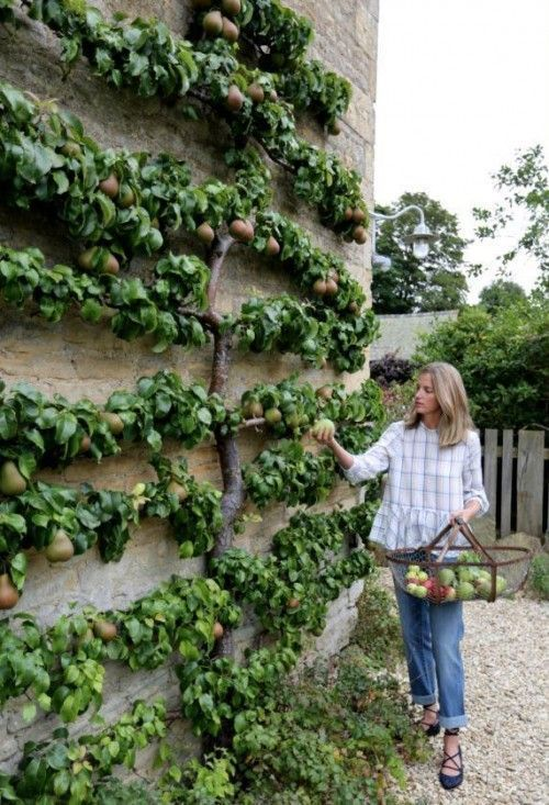 super Durch das Schlüsselloch: Amanda Brooks – #Amanda #Brooks #Keyhole #tree