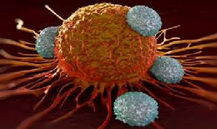Prvá pomoc pri liečbe rakoviny: 10 pravidiel úspešnej liečby, ktoré by mal poznať každý z nás.