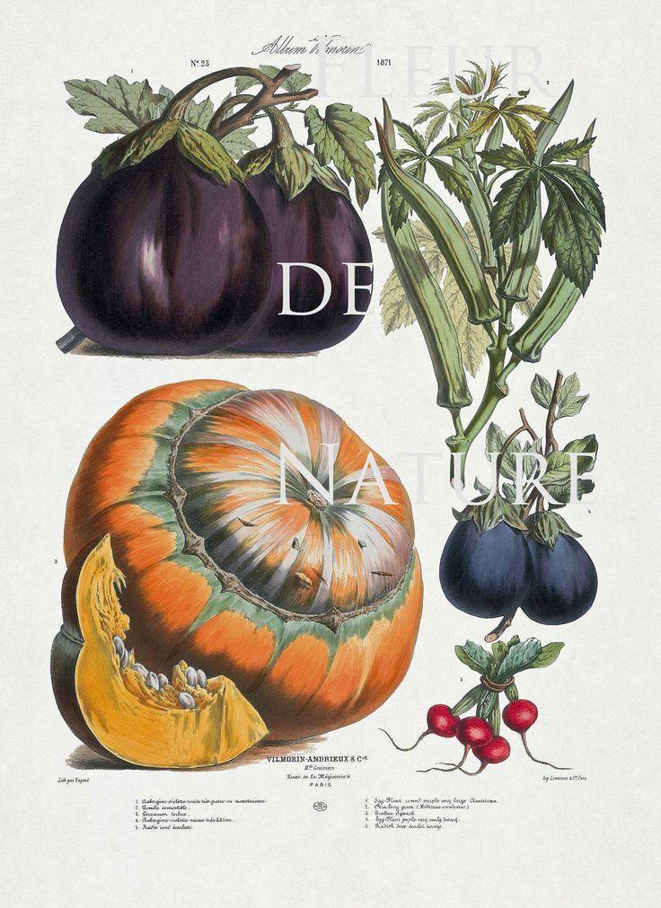 17 Best images about Pumpkin on Pinterest | Vertical ...