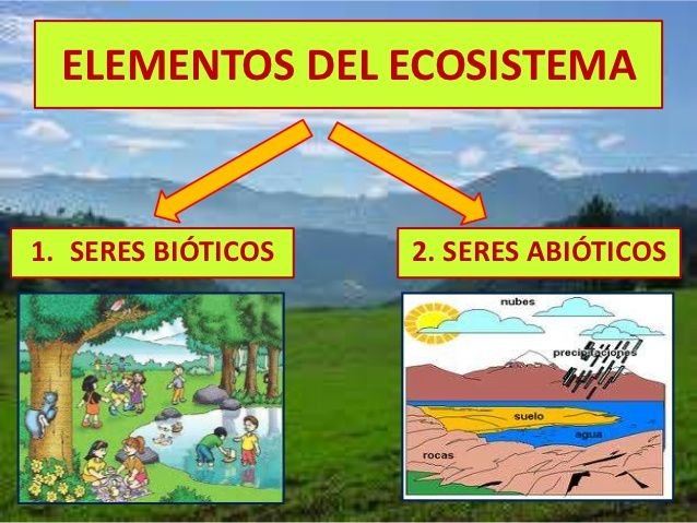 10 best los ecosistemas images on Pinterest  Nature Projects and