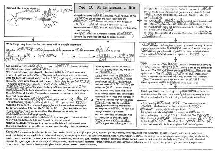 3rd of 6 great B1 revision worksheets from Matther Ferriday with – Maths Revision Worksheets Gcse