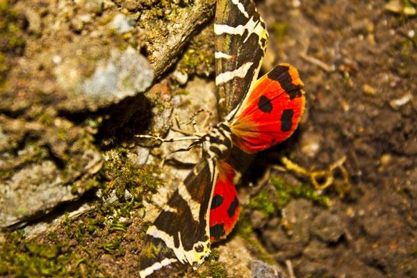 Butterfly Valley, Rhodes Island, Dodecanese,Greece, Amazing Greece, Долина бабочек, Остров Родос, Греция, Журнал Удивительная Греция