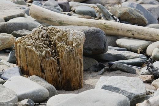 Stumped - Meteghan Centre Beach