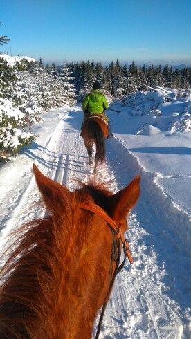 Zimná prechádzka na koňoch 🏇🏇