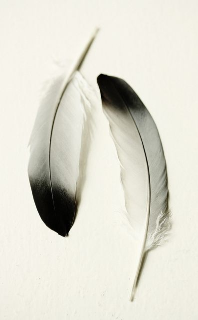 Feathers are wonderful to photograph | souvenirs from a morning walk |