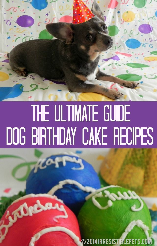 The Ultimate Guide to Dog Birthday Cake Recipes ~ Too cute - such great ideas!  |  IrresistiblePets.com