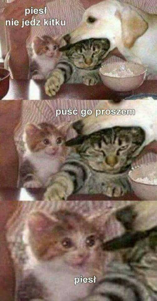 Rozmowa między piesełem i kotełem