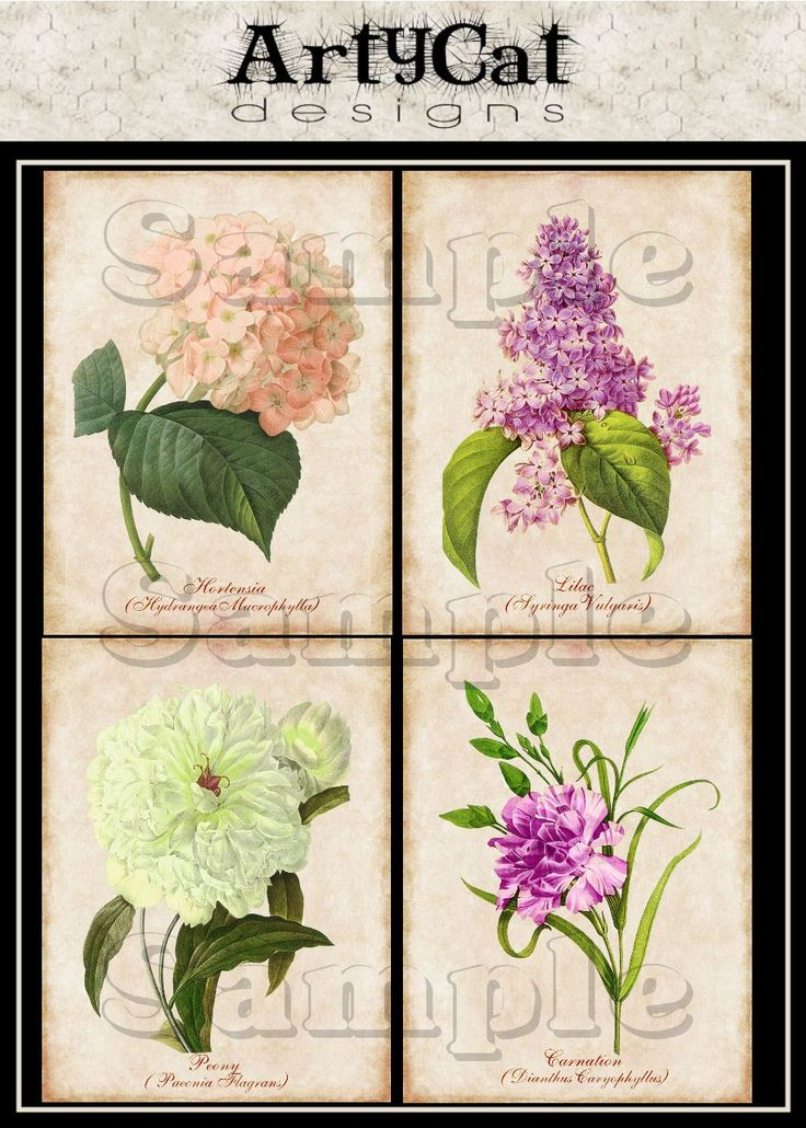 These vintage botanical flowers drawings are on an aged antiqued effects background with a detailed burnt grunge textured edging. Their common names (as well as in Latin) identify them in aged script, and include the hydrangea, lilac, peony, and carnation in the set of colored downloadable and printable images here. #PrintableWallArt #BotanicalPrints #DigitalCollageDownload #HydrangeaWallArt #LilacWallArt