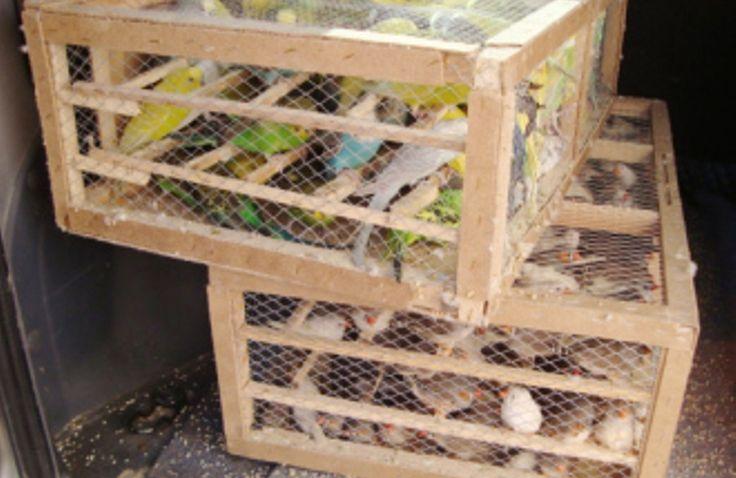 Hayvanları doğal ortamlarından, arkadaşlarından ailesinden ayırıp dört duvar arasına, kafeslere hapsetmek vicdana sığar mı?http://www.kizlarsoruyor.com/kultur-sanat/q1465625-hayvanlari-dogal-ortamlarindan-arkadaslarindan-ailesinden-ayirip #HayvanHaklari