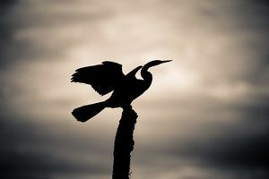 How to Photograph an Iconic Silhouette