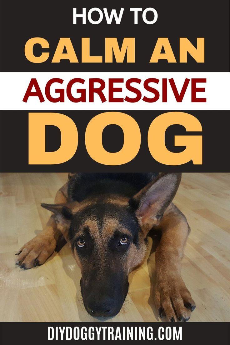 How to calm an aggressive dog aggressive dog dog mom
