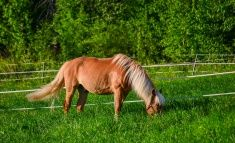 Horse on summer pasture stock photo