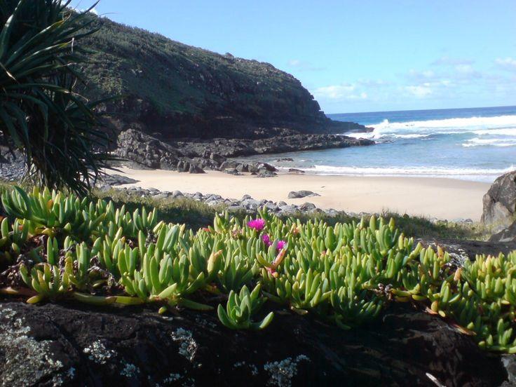 2292 best australian native plants images on pinterest