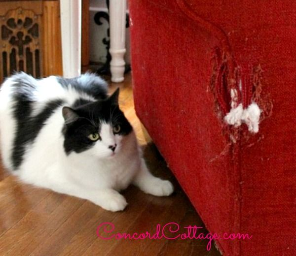 How to Repair a Cat Scratched Chair or Sofa ... steal matching fabric from a cushion