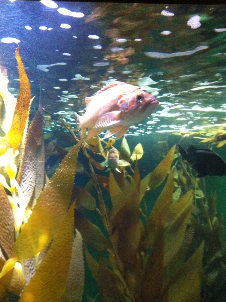 50 best images about national aquarium in baltimore on for Maryland freshwater fish