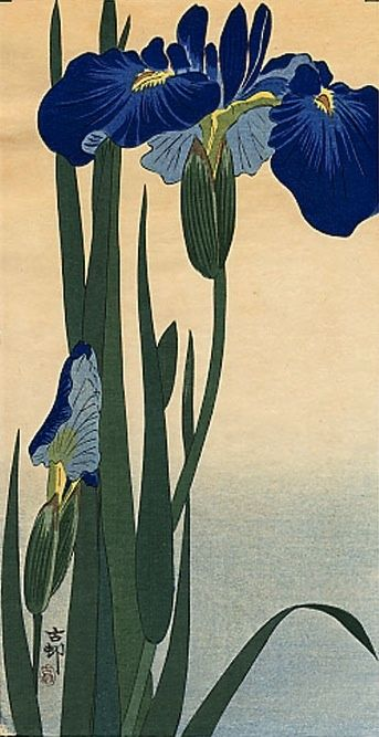 IRIS. Ohara Konson Original Japanese Woodblock Print, 1910