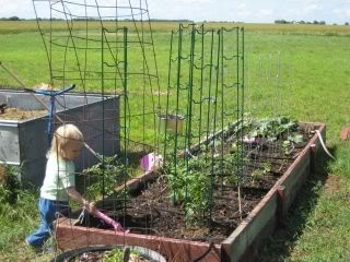 23 best images about layered gardening on pinterest gardens raised beds and vegetables - Lasagna gardening in containers ...