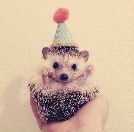 animals wearing birthday hats -#main