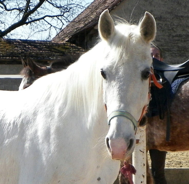 Gita at first spring day, after bath. Finnally beautifull white horse.